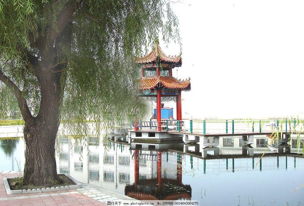 美丽风景 树 柳树 亭子 水桥 倒影 摄影图库