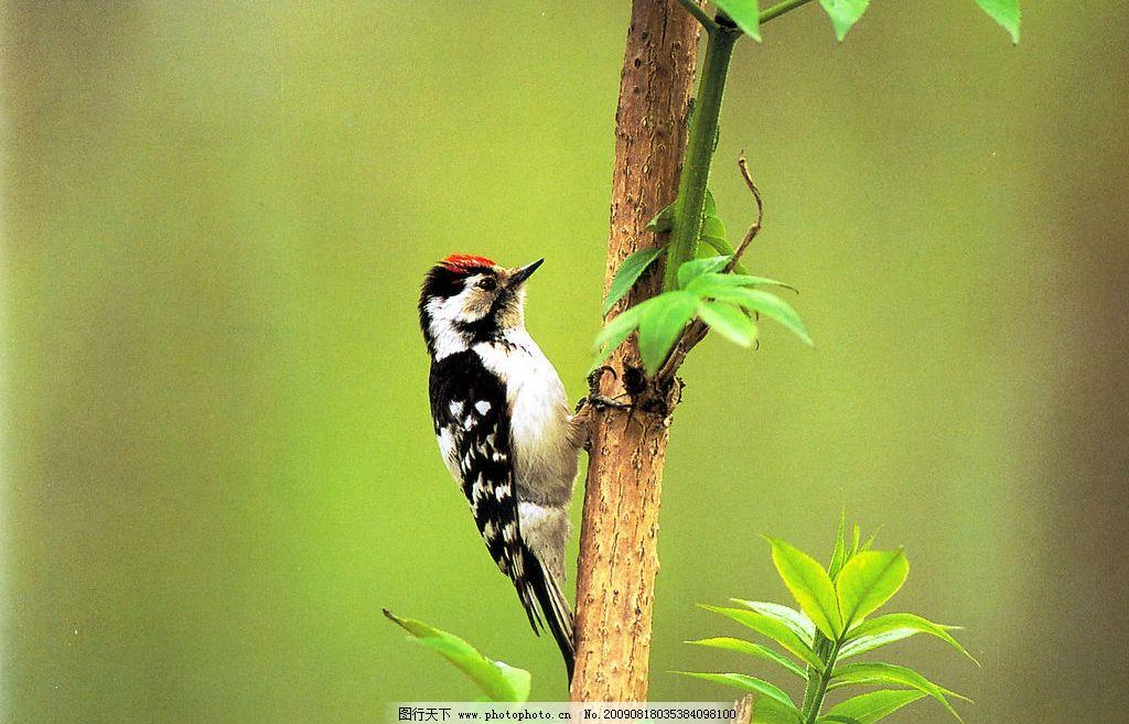 设计图库 高清素材 自然风景    上传: 2009-8-18 大小: 2.