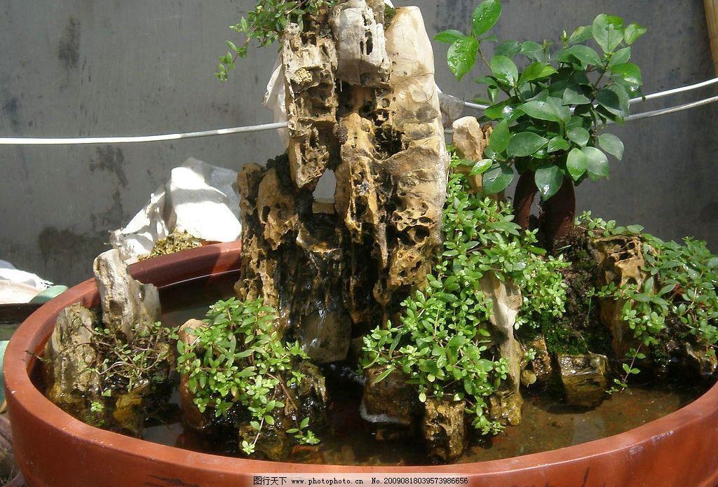 苗木盆景图片大全
