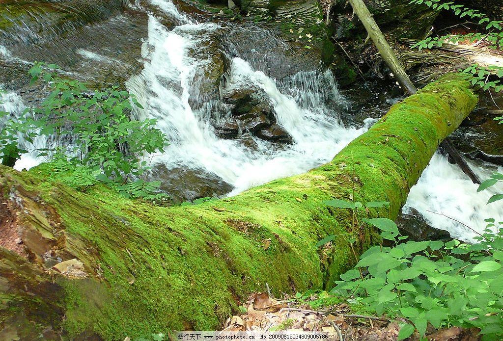 高山流水 树 小溪 绿 苔藓 绿色 环境 自然景观 自然风景 摄影图库