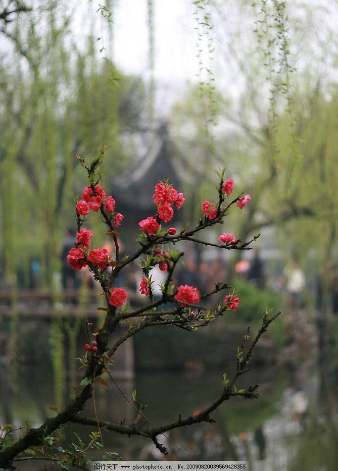 园林梅花图片