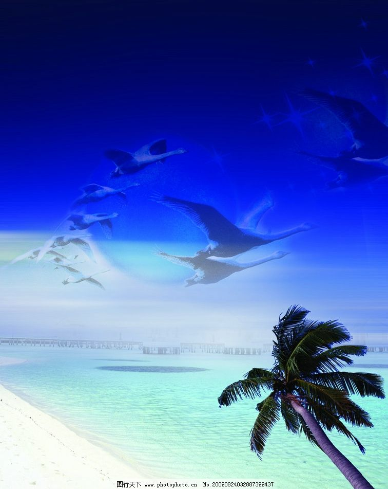 还边景观 海 海鸥 海边 椰子树 psd制作图 风景 psd分层素材 源文件