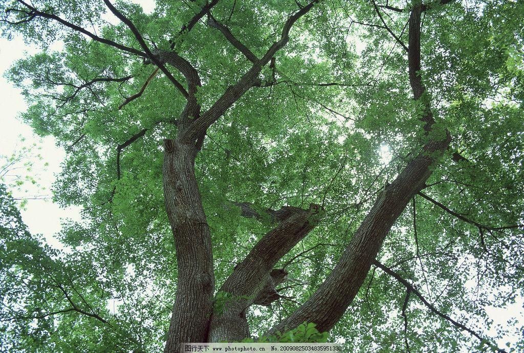 风景 自然景观 自然风景 园林风光 树林 天空 绿色风景 灌木 摄影 350