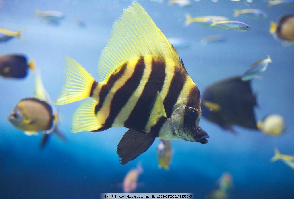 深海海底节肢动物图片大全