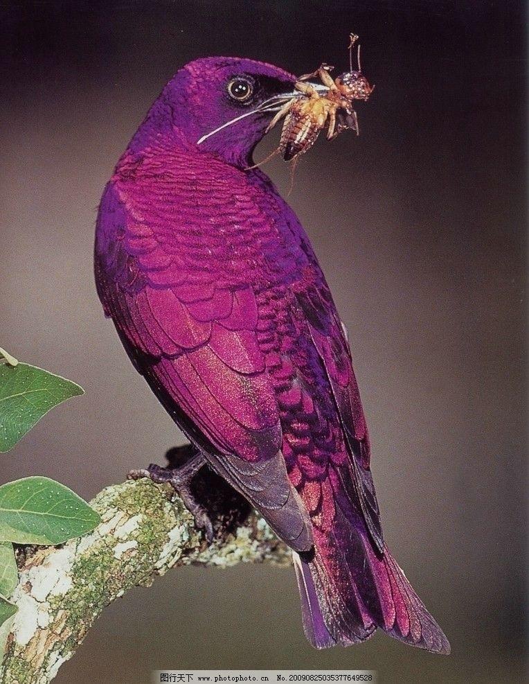 孤鸟 树枝 树叶 紫色鸟 孤鸟序列 鸟类 生物世界 摄影 72dpi jpg