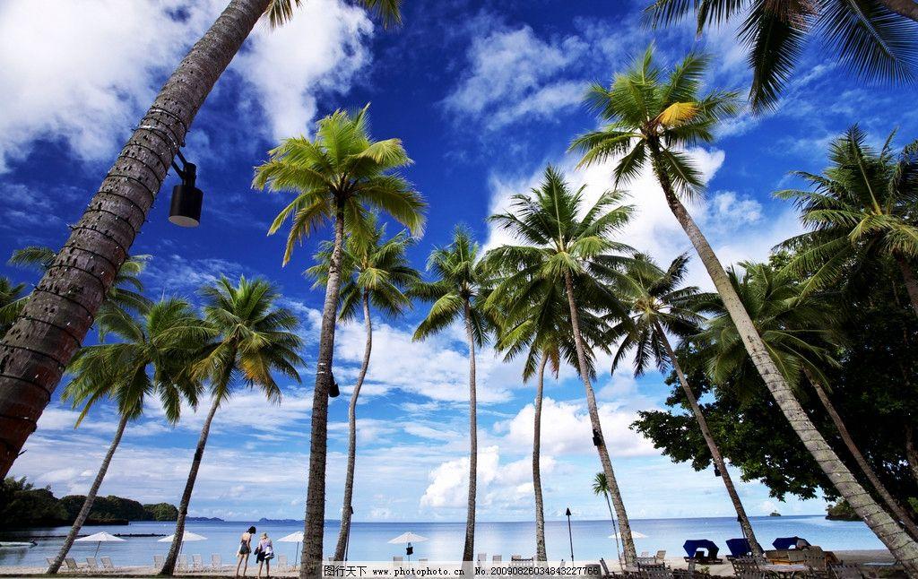 椰树海滩图片_自然风景_自然景观_图行天下图库