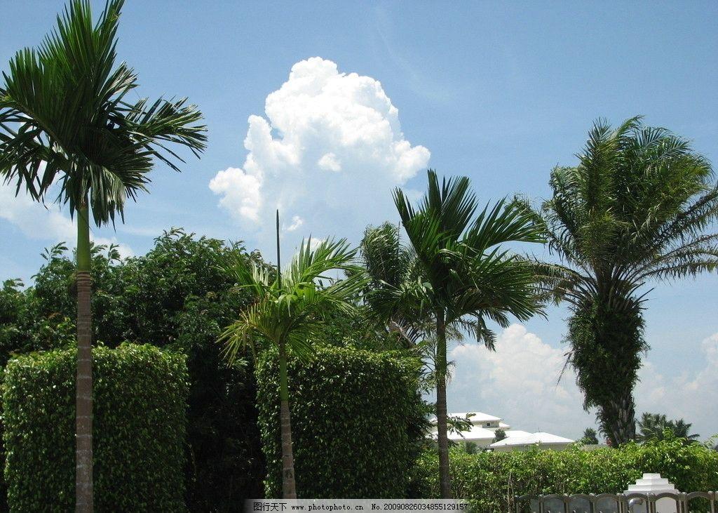 热带风光 椰树 蓝天白云 自然风景 自然景观 摄影 180dpi jpg