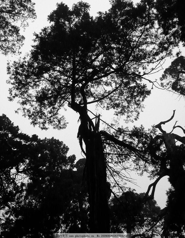 黑色树 树木 树林 森林 黑白 自然 花花草草 自然风景 自然景观