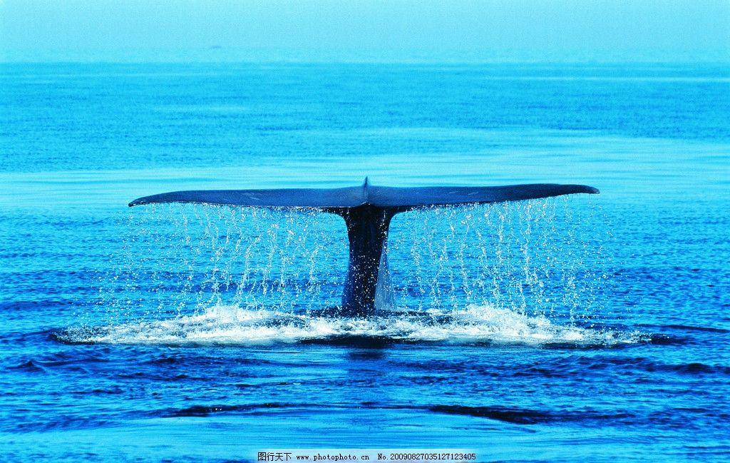 鲸鱼手绘电脑壁纸