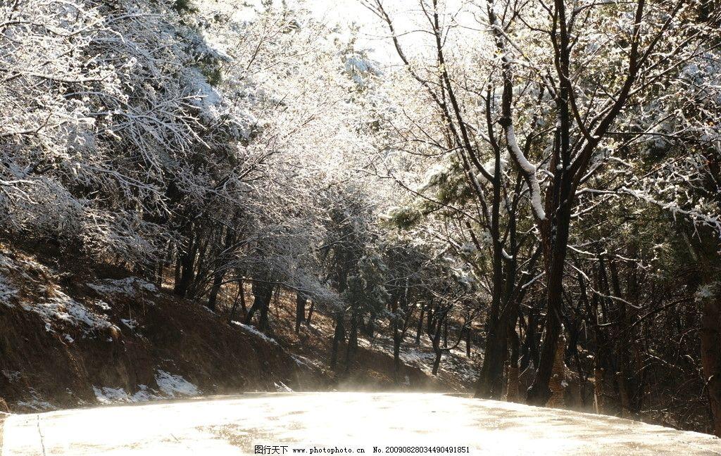 雪景 雪景森林 树林 背景 黑白光影 山水风景 自然景观 摄影 300dpi
