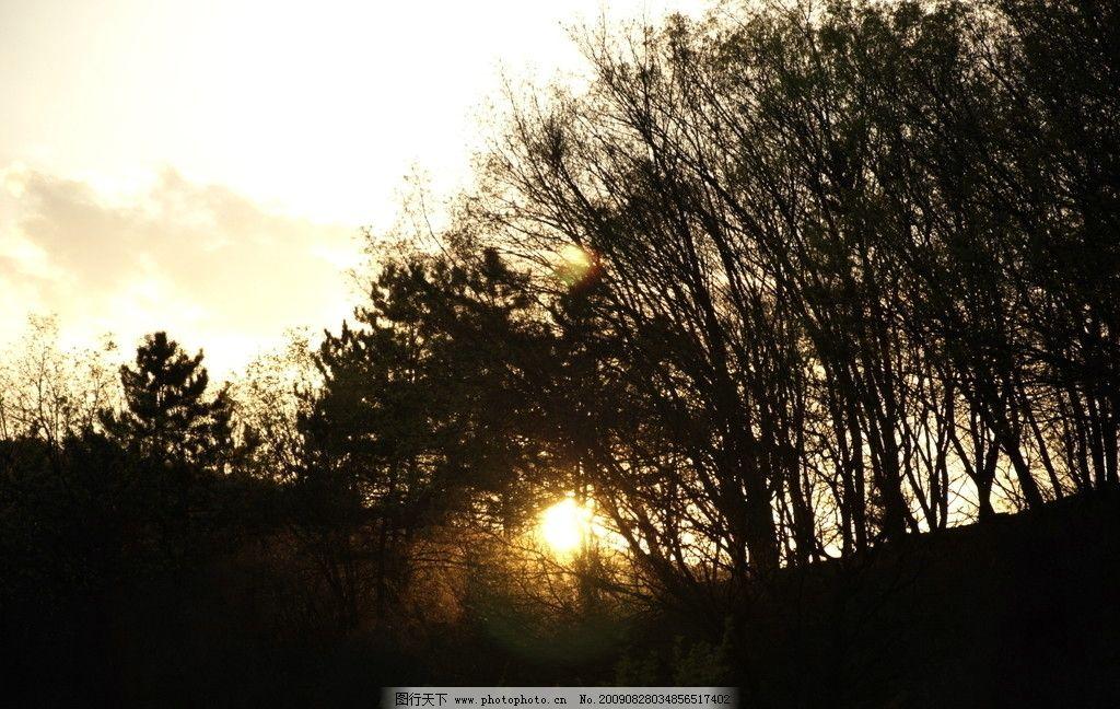 霞光 森林剪影 对比 背景 棕黄色调 暗调 自然风景 自然景观 摄影 300
