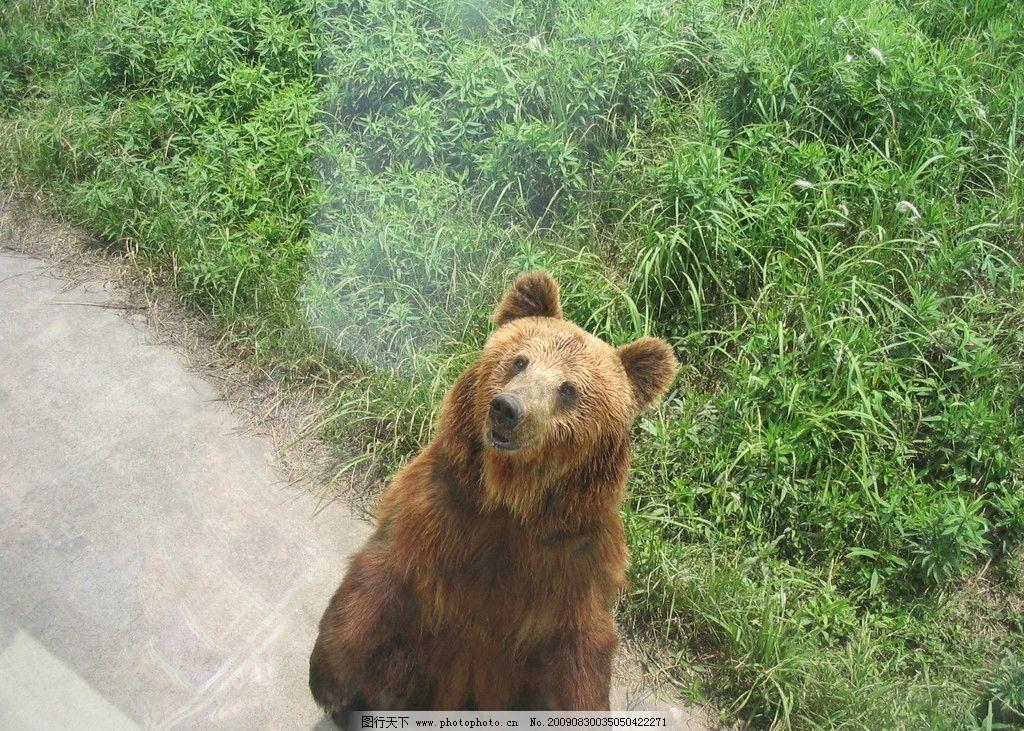 小熊 站立 野生动物 生物世界 摄影 180dpi jpg