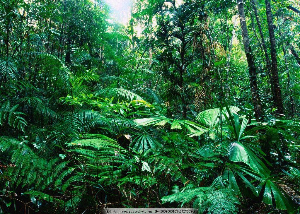 热带雨林 森林 地表 植被 植物 大树 绿叶 风景辑 自然风景