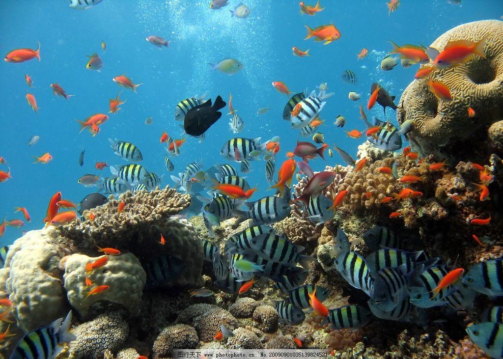 海底生物 海底世界 各种鱼类 石头 珊瑚 水泡 海洋生物 生物世界 摄影