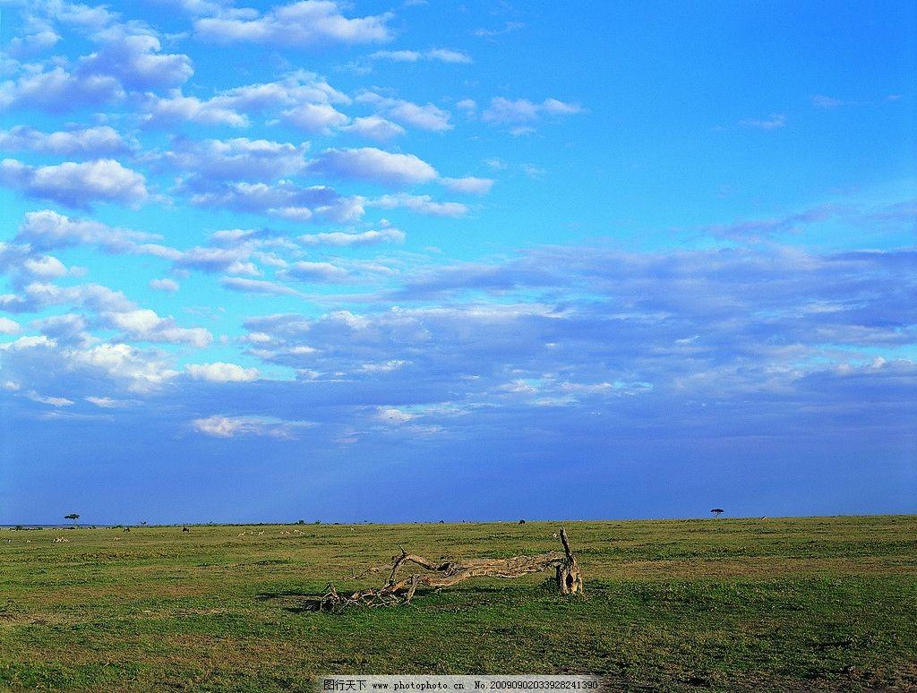 蓝天白云草地 蓝天白云草原 天空 自然景观 自然风景 天空和云 枯木