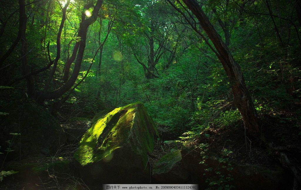 绿野仙踪 绿色森林 大自然 树木 石头 阳光 旅游摄影