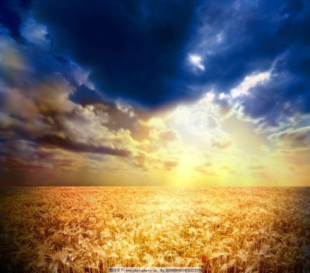 高清麦穗图片,麦穗特写 麦田风景 丰收 高清图片 高清