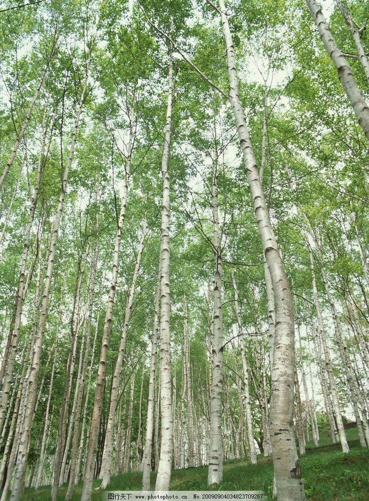 树林 自然 绿色 树木 自然风景 自然景观 摄影 350dpi jpg