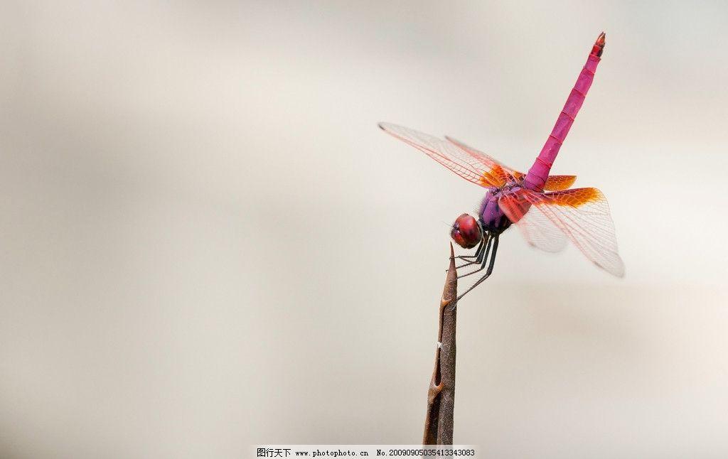 蜻蜓数字连线简笔画