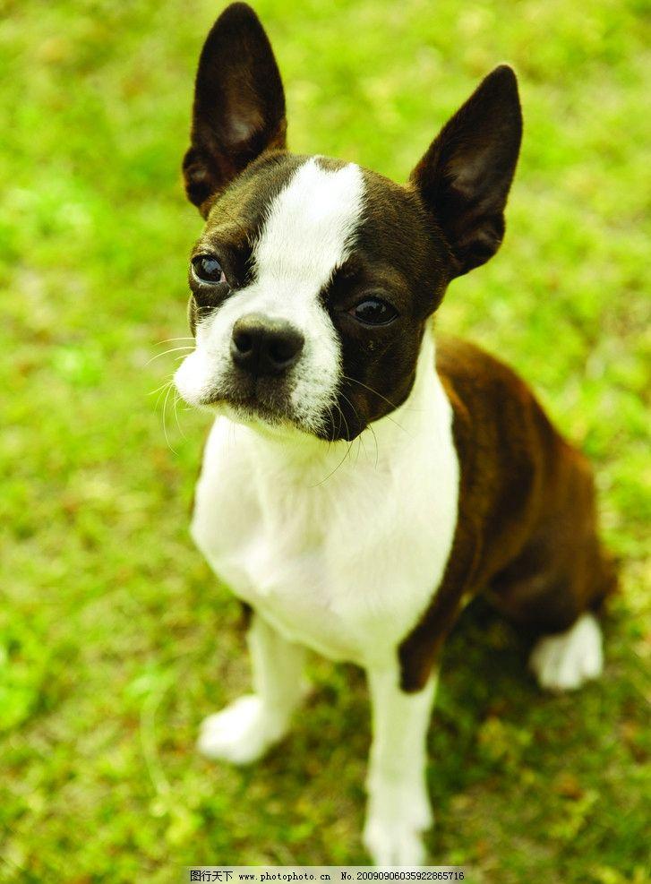 宠物 小狗 犬 可爱狗 可爱动物