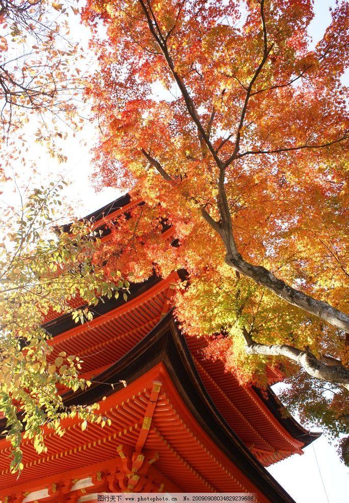 金秋红叶 枫树林 金黄 蓝天 秋天 秋高气爽 屋檐 自然风景 自然景观
