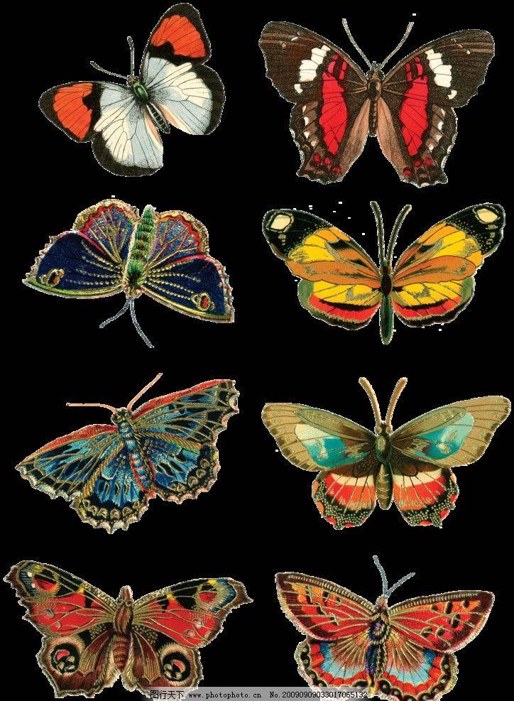 手绘效果蝴蝶 5图片
