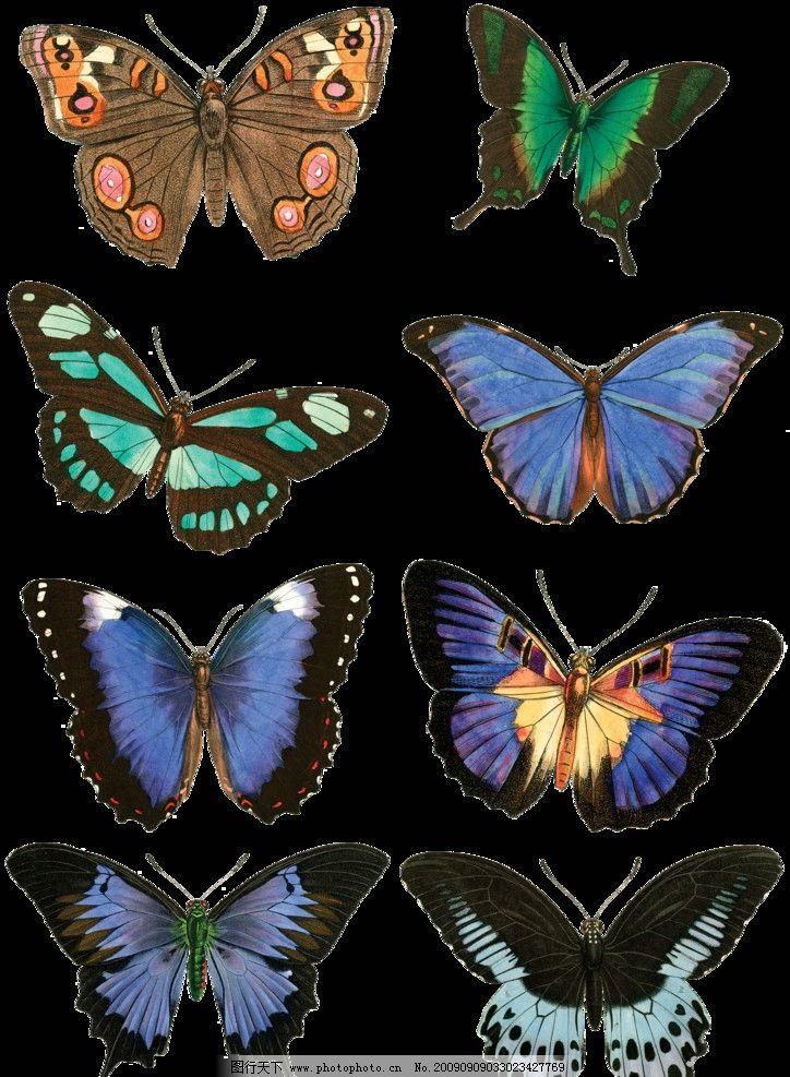手绘效果蝴蝶 2图片