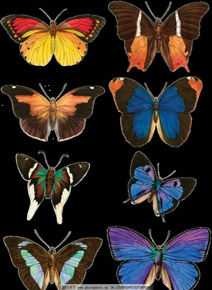 手绘效果蝴蝶1图片