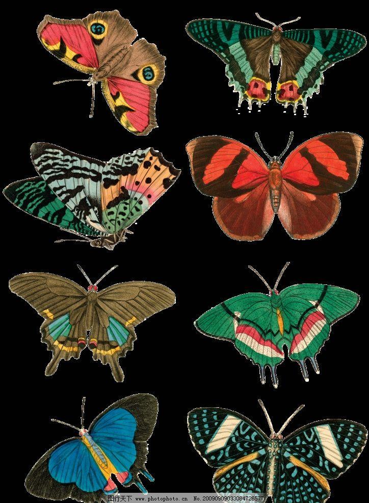 手绘效果蝴蝶 8图片