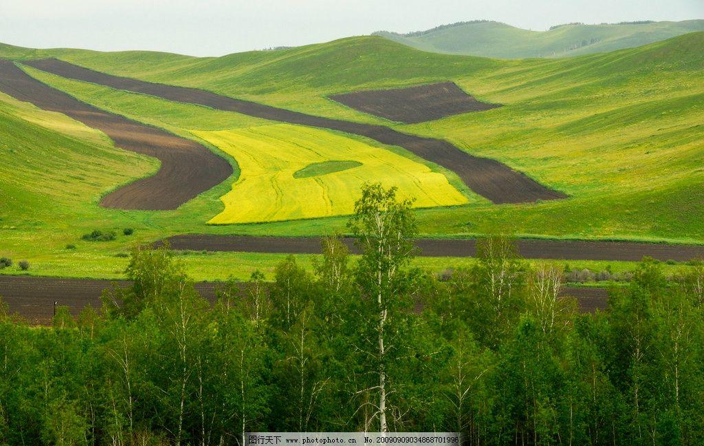 神奇大地 草原 风景 自然风光 油菜花 图案 厄尔古那 七卡 自然风景