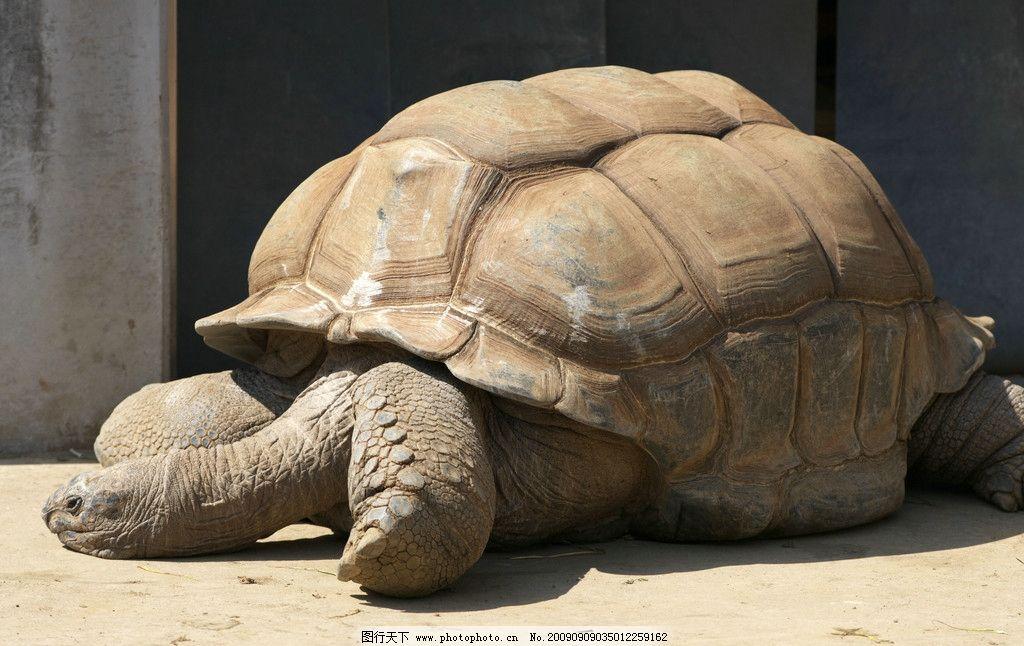 长隆野生动物世界陆龟