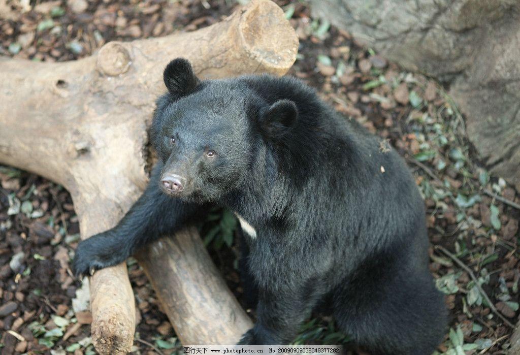 杂食性动物 国家二级保护动物