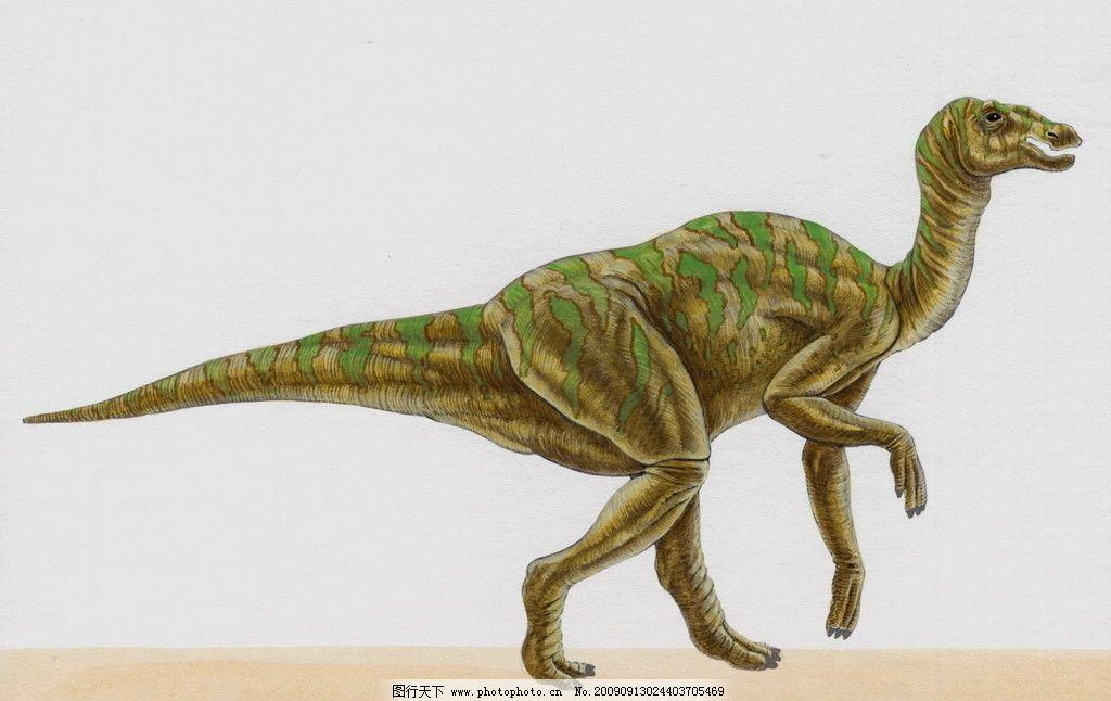 恐龙图片_野生动物_生物世界
