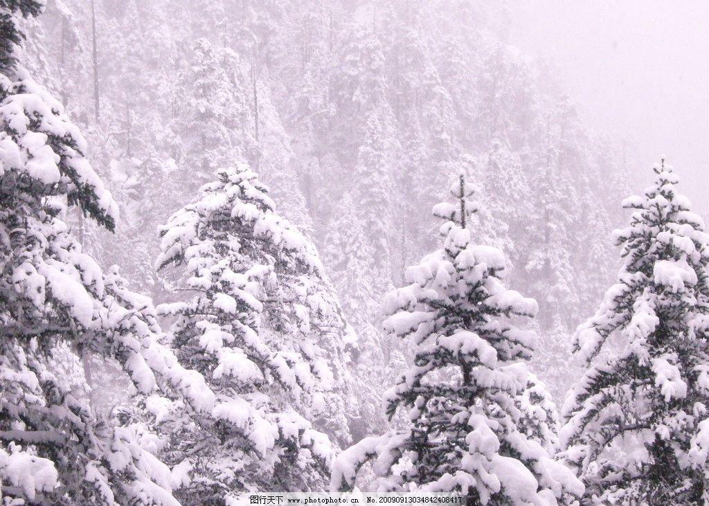 松树雪景 冬天 冬季 冬眠 自然风景 自然景观 摄影 72dpi jpg