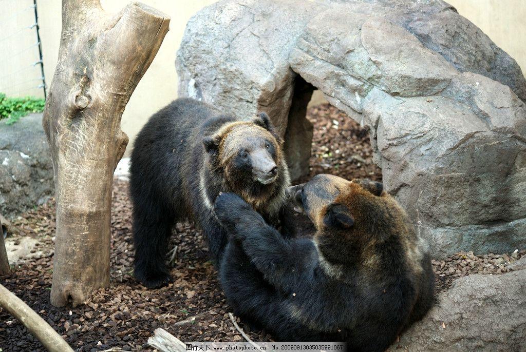 捅熊 大自然 景观 景象 生物 动物 田野 岩石 树木 熊类 野生动物