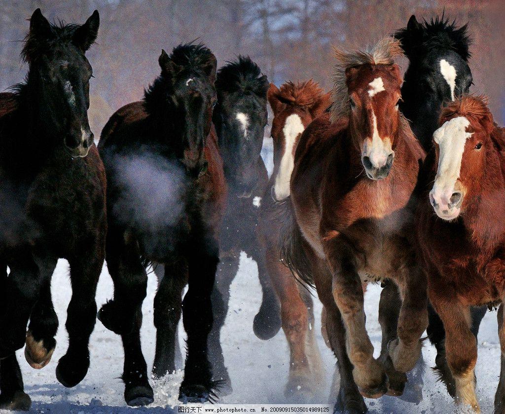 奔跑的骏马 生物世界 其他生物