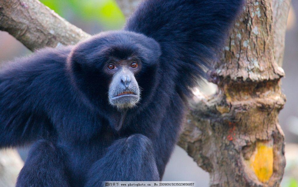 动物表情 猩猩 猴子图片