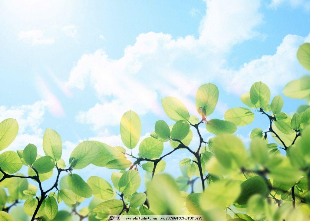 美丽清晨 阳光 树叶 天空 自然 摄影 自然风景 自然景观 350dpi jpg