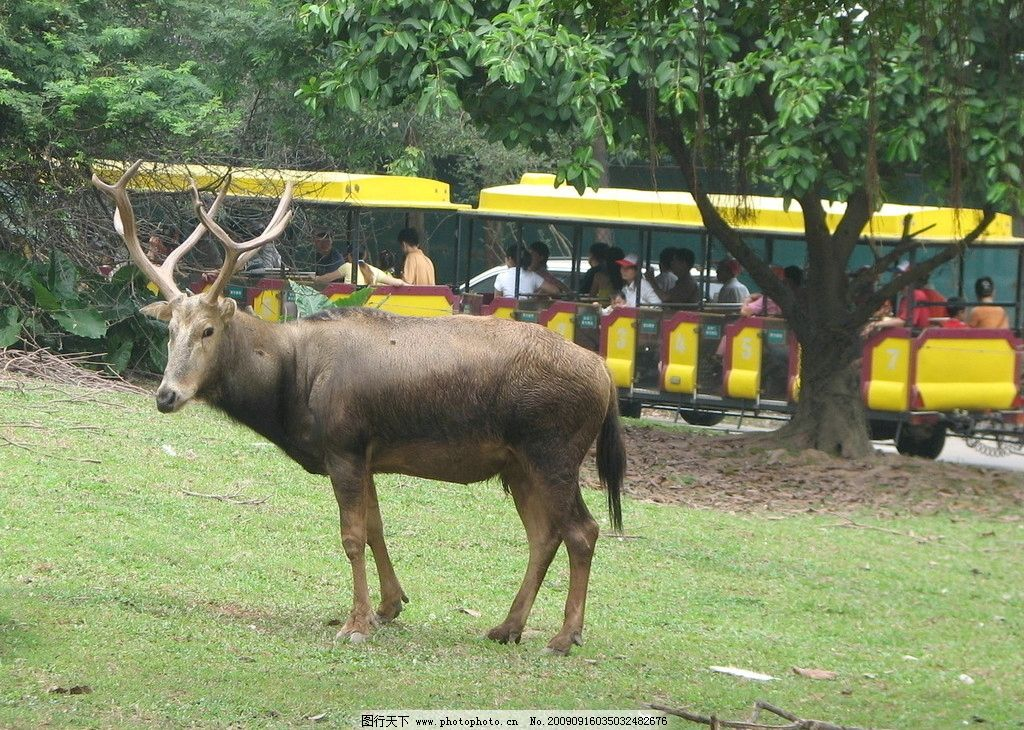 麋鹿 四不象 elk 野生动物 生物世界 摄影 180dpi jpg