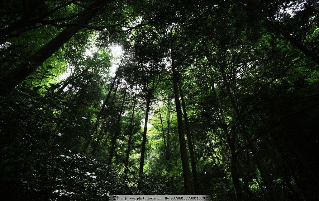 世界风景树林壁纸