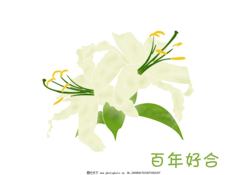 手绘百合 韩式 花纹 鲜花 图案素材 psd分层 花朵图案 浅色 喜庆 包装