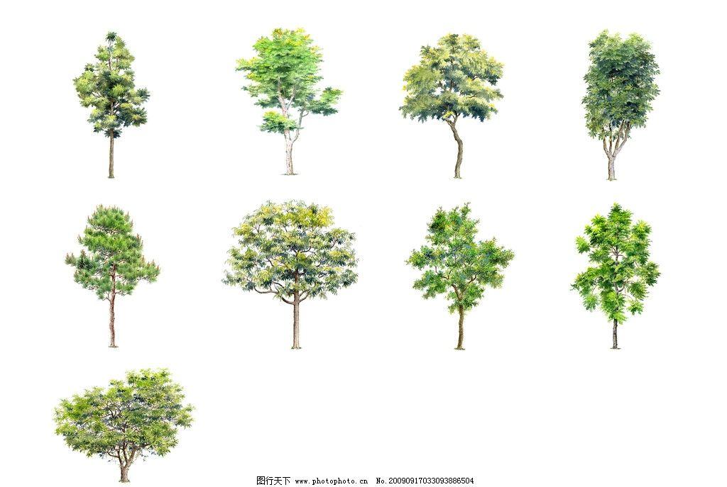 植物 手绘植物 素材 树木 psd分层素材 源文件 150dpi