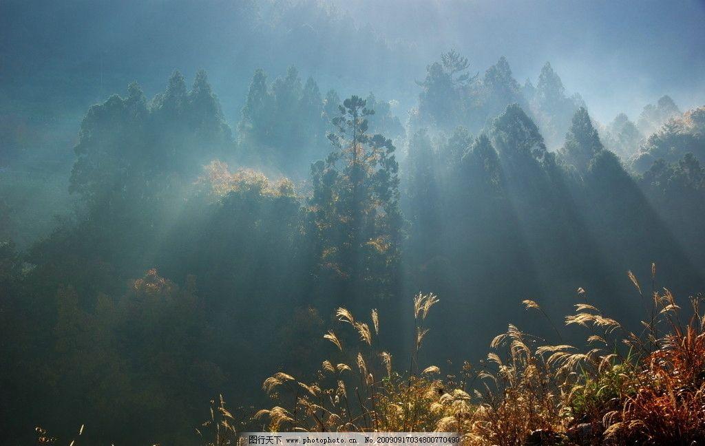 阳光普照 树林 树木 早晨 清晨 夏季 松树 自然景观 自然风景 摄影