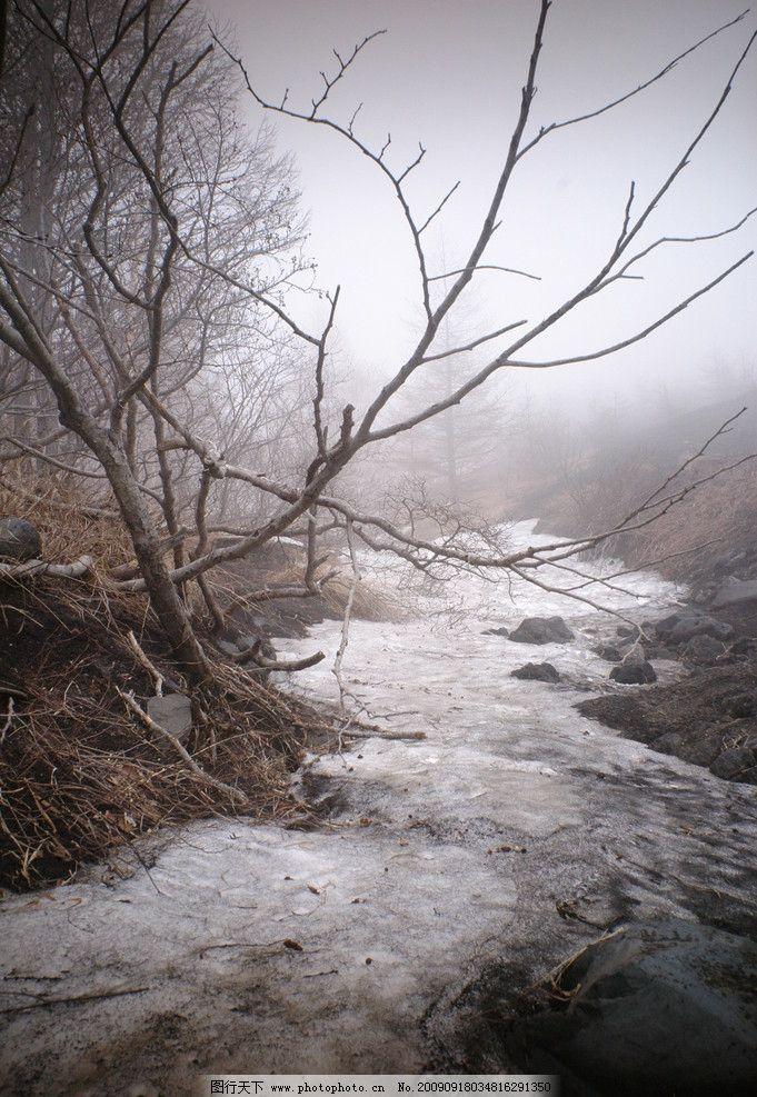 残雪 树 树木 冬天 早晨 自然景观 风景名胜 摄影图库 自然风景 600