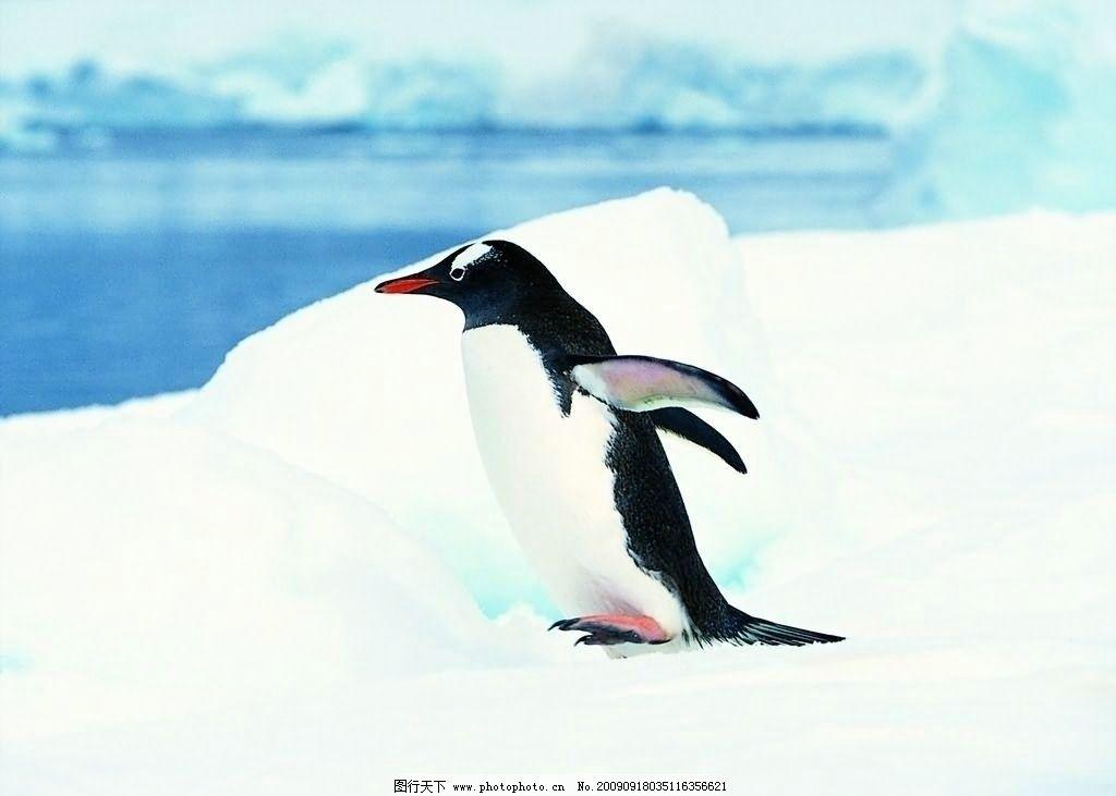 动物 企鹅 1024_731