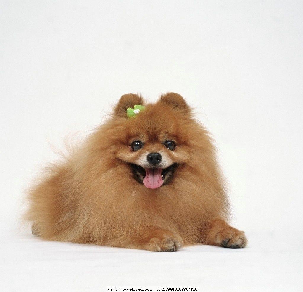 宠物 小可爱 狗狗 小狗 动物 家禽家畜 生物世界 摄影 72dpi jpg