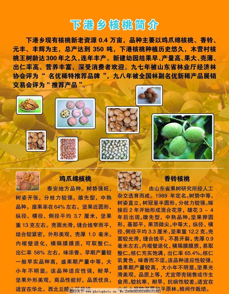 旅游景点宣传展板 山东泰安 下港乡 优质果品 苗木 核桃 简介