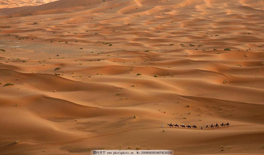 沙漠 沙丘 大沙漠 骆驼