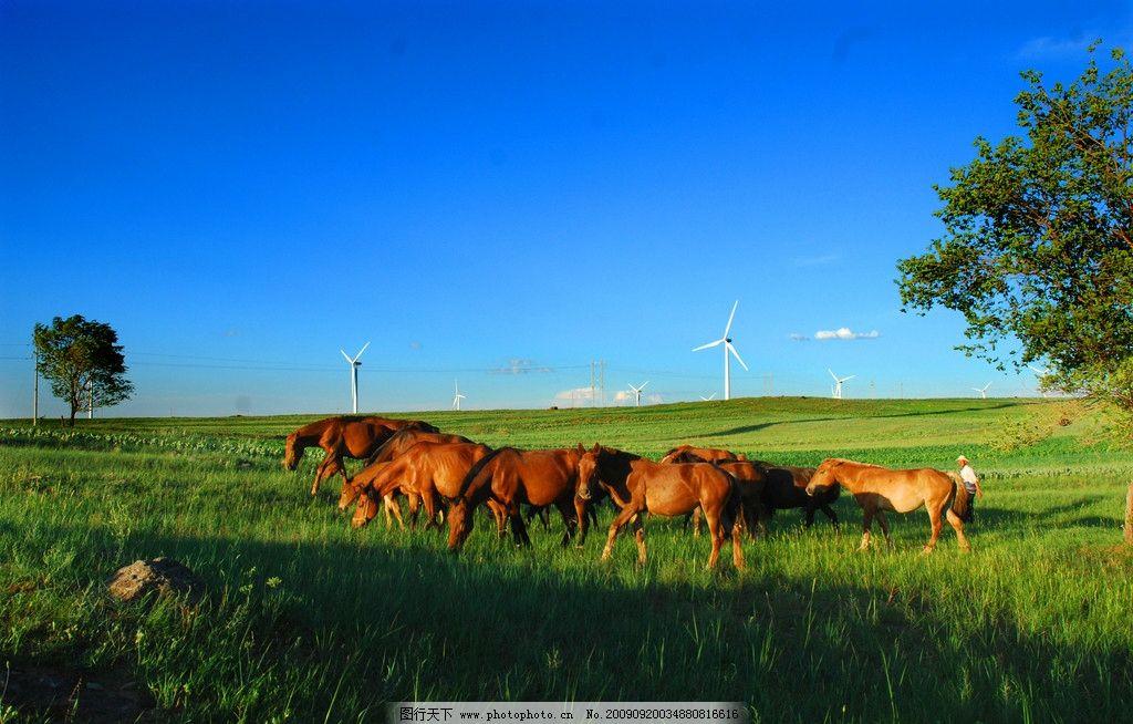 草原牧歌 张北草原 蓝天 骏马 风力发电 自然风景 自然景观 摄影 300