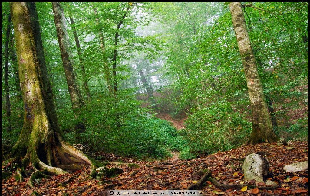 绿色森林 环保 树林 落叶 原始森林 热带雨林 山水风景 自然景观 摄